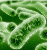 Milyenek a barátságos baktériumok?